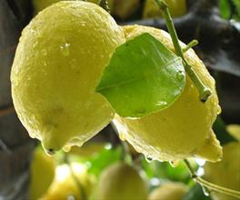 Лимоны - Сицилия